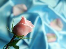 Rosa dentellare su raso blu Fotografia Stock