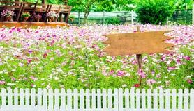 Rosa der Kosmosblume weißer und weißer Zaun hölzern Stockfoto