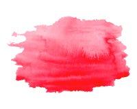 Rosa des Aquarells helle, rote Hand gezeichnete Beschaffenheit, lokalisiert auf weißem Hintergrund, Vektor Stockfotos