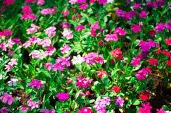 Rosa des Blumenhintergrundes Stockfotos