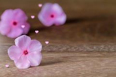 Rosa des selektiven Fokus blüht das Blühen mit rosa Herzen mit weichem Schatten auf Schmutzweinleseholztisch Stockfoto