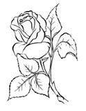 Rosa. Desenho da carta branca. Fotografia de Stock Royalty Free
