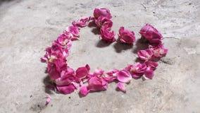 Rosa di amore Fotografia Stock