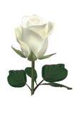 Rosa di bianco Immagine Stock Libera da Diritti