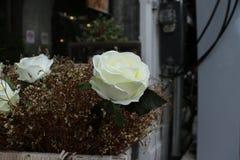 Rosa di bianco del tessuto Immagini Stock