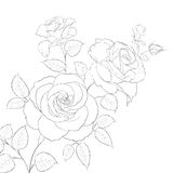 Rosa di bianco isolata Immagini Stock