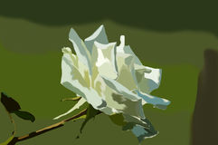 Rosa di bianco nel giardino Fotografie Stock