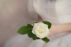 Rosa di bianco nelle mani della sposa Fotografie Stock
