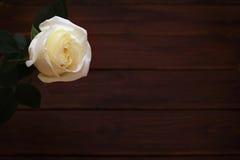 Rosa di bianco su fondo di legno Fotografie Stock Libere da Diritti