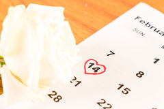 rosa di bianco sul calendario con la data del 14 febbraio Valentin Immagine Stock