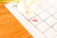 rosa di bianco sul calendario con la data del 14 febbraio Valentin Fotografie Stock Libere da Diritti