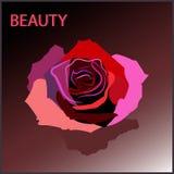 Rosa di colore Immagine Stock
