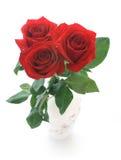 Rosa di colore rosso Immagini Stock Libere da Diritti
