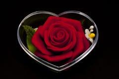 Rosa di colore rosso chiusa nell'intelaiatura di figura del cuore Fotografia Stock