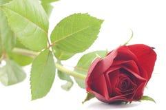 Rosa di colore rosso dei biglietti di S. Valentino isolata su bianco Fotografie Stock