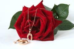 Rosa di colore rosso e catena dorata Immagini Stock