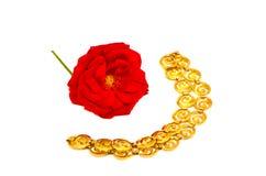 Rosa di colore rosso e collana della catena dorata su bianco Immagini Stock