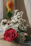 Rosa di colore rosso e fiori bianchi Fotografia Stock Libera da Diritti