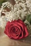 Rosa di colore rosso e fiori bianchi Immagine Stock Libera da Diritti