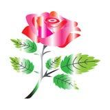 Rosa di colore rosso isolata su priorit? bassa bianca illustrazione vettoriale