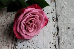 Rosa di rosa con le foglie su fondo di legno fotografia stock libera da diritti