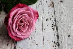 Rosa di rosa con le foglie su fondo di legno fotografie stock libere da diritti