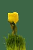 Rosa di giallo Fotografia Stock