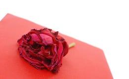 Rosa di morte fotografia stock