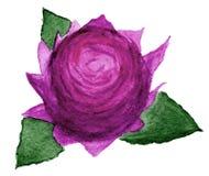 Rosa di rosa in acquerello Fotografie Stock Libere da Diritti