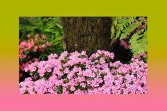 Rosa di rosa delle petunie, narciso giallo, viole del pensiero, bocca di leone e tagete, bello bianco del nero del fondo dell'erb Immagini Stock