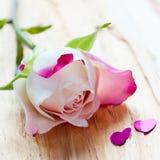 Rosa di rosa e due piccoli cuori Immagine Stock