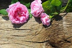 Rosa di rosa selvaggio su fondo di legno Immagini Stock Libere da Diritti