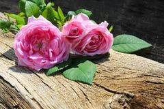 Rosa di rosa selvaggio su fondo di legno Fotografie Stock Libere da Diritti