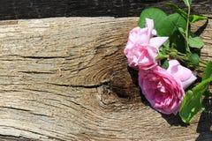 Rosa di rosa selvaggio su fondo di legno Fotografia Stock Libera da Diritti