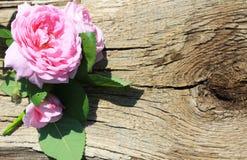 Rosa di rosa selvaggio su fondo di legno Fotografie Stock