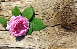 Rosa di rosa selvaggio su fondo di legno Immagini Stock