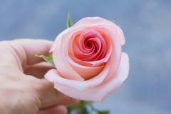 Rosa a disposizione Fotografia Stock