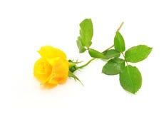 Rosa do amarelo imagens de stock