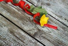 Rosa do amarelo com fita vermelha Fotografia de Stock Royalty Free