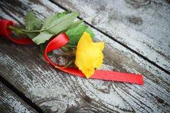 Rosa do amarelo com fita vermelha Foto de Stock Royalty Free