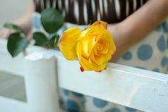 Rosa do amarelo nas mãos das mulheres Foto de Stock
