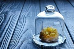 Rosa do amarelo sob um tampão de vidro Fotografia de Stock Royalty Free