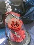 A rosa do amor imagens de stock