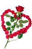 Rosa do amor. foto de stock royalty free