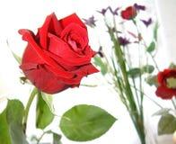 Rosa do amor imagens de stock royalty free