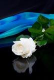 Rosa do branco e seda azul Fotografia de Stock Royalty Free