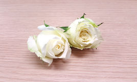 Rosa do branco no fundo de madeira Fotografia de Stock