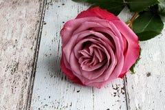Rosa do rosa com as folhas no fundo de madeira Fotos de Stock