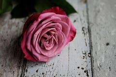 Rosa do rosa com as folhas no fundo de madeira Foto de Stock Royalty Free