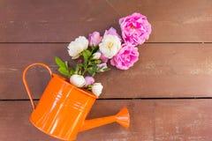 Rosa do rosa, flores das rosas brancas e vaso alaranjado da lata molhando em um fundo de madeira do vintage Cartão da mola feliz foto de stock